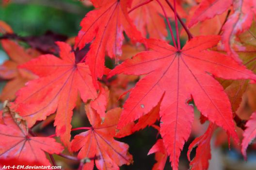 Autumn Maple Tree by Art-4-EM