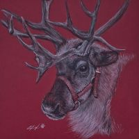 Reindeer - One of Eight by stephdoyle