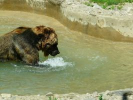 Grizzly Bear 04 by Unseelie-Stock