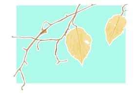 Tissue Paper Leaves by kendrin