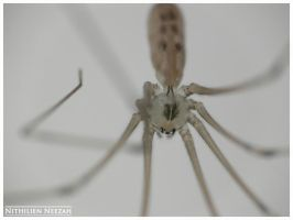Spider 3 by nithilien