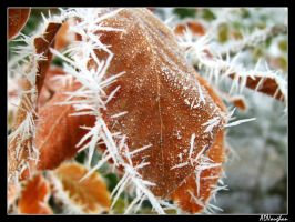 Frosty around the edges by phoenixtamer