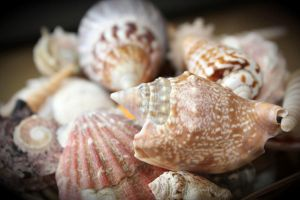 sea shells by vickywilson