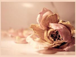 vintage rose..:2:.. by sayra