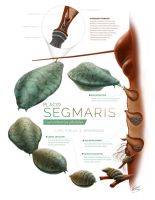 Segmaris-full by MichaelBeaudry