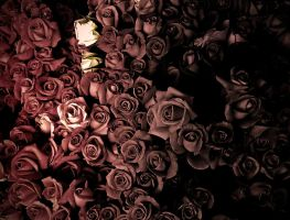 Roses by maxjdgt
