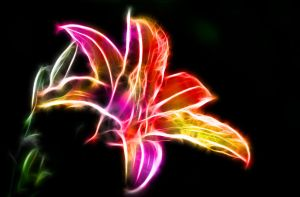 Fractal Tiger Lily by minimoo64