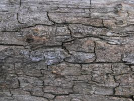 Wood Texture 3 by ArrsistableStock