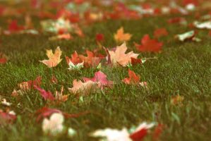 Leaves  and October by jennapasechnick