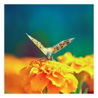 butterfly 1 by Godling-Studio