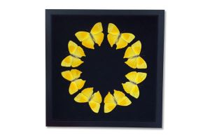 Yellow butterfly Display by TheButterflyBabe