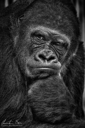 The Thinker by Nightline