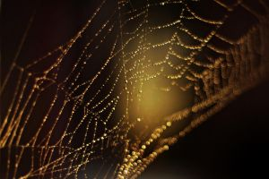 Web by olgsss