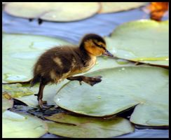 little duck III runner by slawomirj