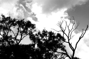 Pounces of trees by FantasyWordful