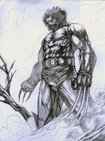 Wolverine pencils 001 by allengeneta