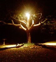Tree Light by TheGerm84