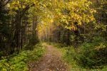 Autumn7 by Lubov2001
