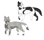New cat characters by SnowLilies