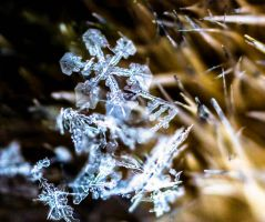 Snowflake on a paint brush by ColorSlow