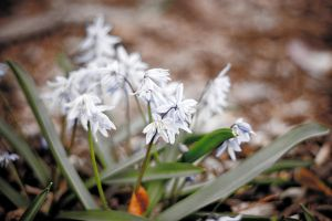 White Hyacinth by light-scape