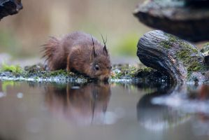 Squirrel by the Water by AngelaLouwe