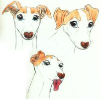 Italian Greyhound by TigrisTheLynx