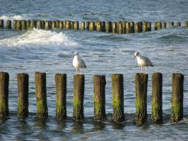 Seagulls, Poland, Baltic coast by yulia-juliamy