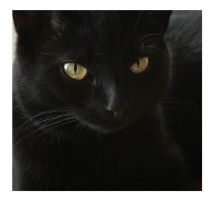 cleo the cat 3 by mzkate
