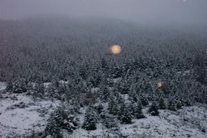 Signs of Winter - Number 1 by bisi
