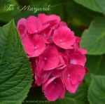 For Margarete by Sisterslaughter165