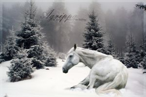 Agrippa done by HorseWhisperer101