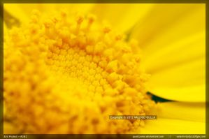 Yellow Pollen by ValerioBulla