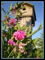 Old Birdhouse and Sweet Peas by KaleyObsidia