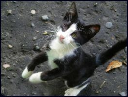 Kitten from Batumi by Nailo