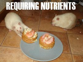 Requiring Nutrients by LOL-Cat