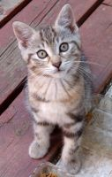 Thick-striped kitten very close by Ripplin