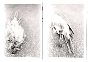 Film BW - dead bird by TrendyDNA