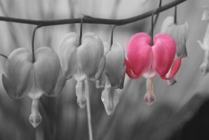Bleeding Heart by tcm-photography