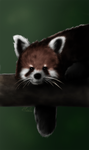 Red Panda by Earldense