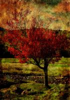 Pieces of autumn.. by hearthy