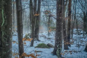 A mist in the snow. by qwstarplayer