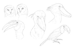 Bird sketches by MoonlightLyanti