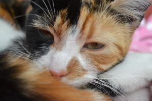 Poppy curled up 2 by Spiremagus-Esquire