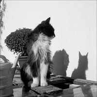 lovely cat and shadow by rioMenor