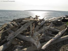 Driftwood Stack On the Beach by JLAT1990