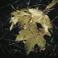 .Old leaves by tgphotographer