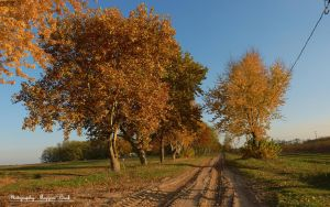 The trees in November. HDR-picture. by magyarilaszlo