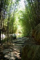 chinese gardens 8 by 365degrees