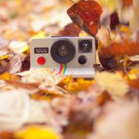 Polaroid love by Pamba